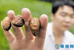 据食药局消息 35家餐饮被查用罂粟壳