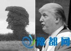 英国有棵树神似特朗普 网友:头发也比他多(图)