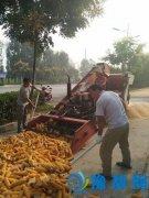 城里人没见过的郏县乡村秋收镜头:一亩地玉米10分钟轻松脱粒