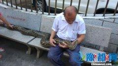海南六旬老人与蟒蛇同吃住情如亲人(图)