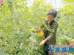 汤阴县农民工返乡创业侧记