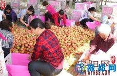 内黄县亳城乡促进农民群众脱贫致富