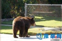 遭黑熊袭击 日本群马野生动物园一工作人员身亡
