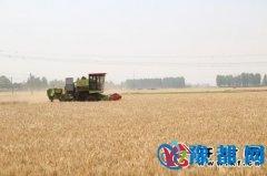 尉氏县已收获小麦69.5万亩祥符区沙区小麦基本收割完毕