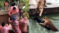 动物园直播活驴喂老虎 园方:股东个人行为