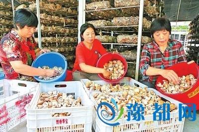 """【砥砺奋进的五年】舞阳县李斌庄的""""看家宝"""""""