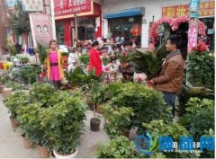 王孟镇农民购买花卉成时尚(图)