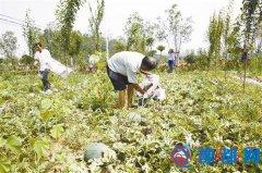 遂平县褚堂乡于楼村产业扶贫结下的硕果