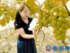 生态农业助农民增收