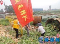 殷都区曲沟镇打响铲除黄顶菊的生态保卫战