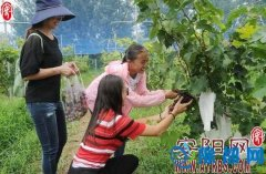 内黄县发展乡村旅游带动群众脱贫致富