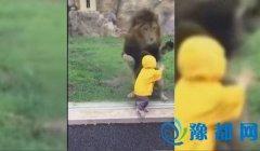 两岁小男孩动物园看狮子 转身后竟发生这一幕