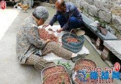东岗镇西卢寨村大力发展坡地经济