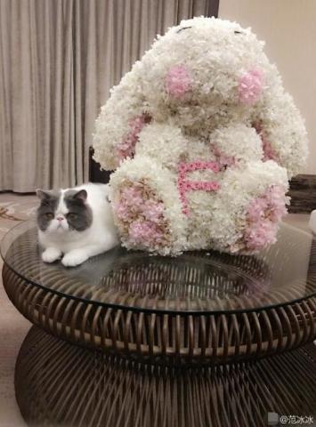 七夕零点刚过,女神范冰冰也开始在微博上虐狗!她晒出了一个小兔造型花球,仔细看来,玩偶的肚子上还有粉色玫瑰组成的F字,寓意范字。