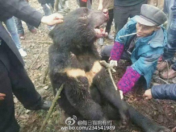 熊表皮受损。 来源:@每日猫狗有约