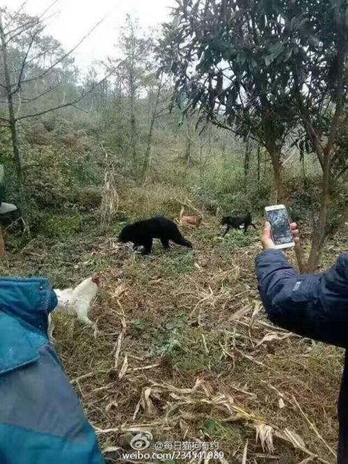 有人在拍熊。 来源:@每日猫狗有约