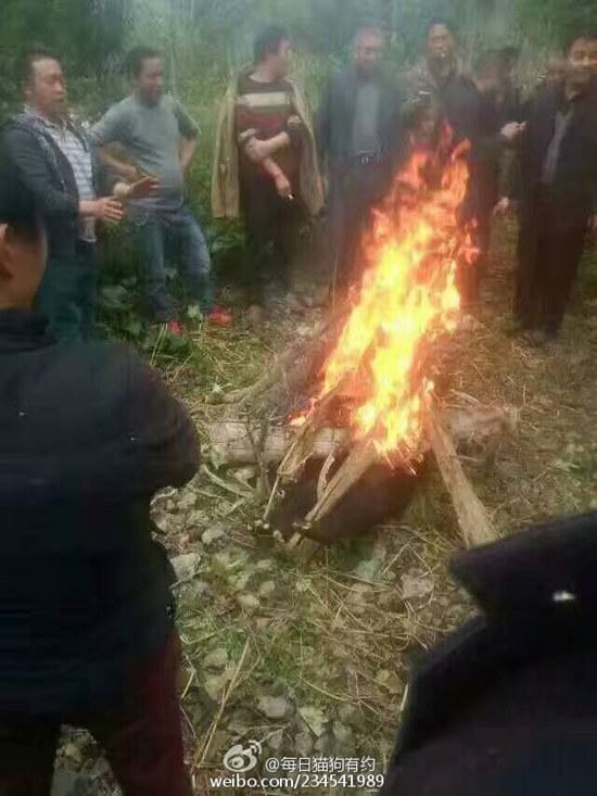 疑似熊被火烤现场。 来源:@每日猫狗有约