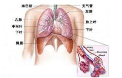 急性支气管炎的症状有哪些