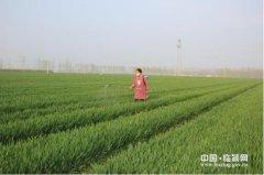 王孟镇切实加强小麦病虫害防治工作(图)
