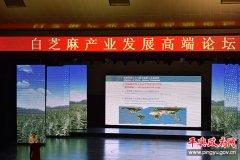 白芝麻产业发展高端论坛在平舆举行