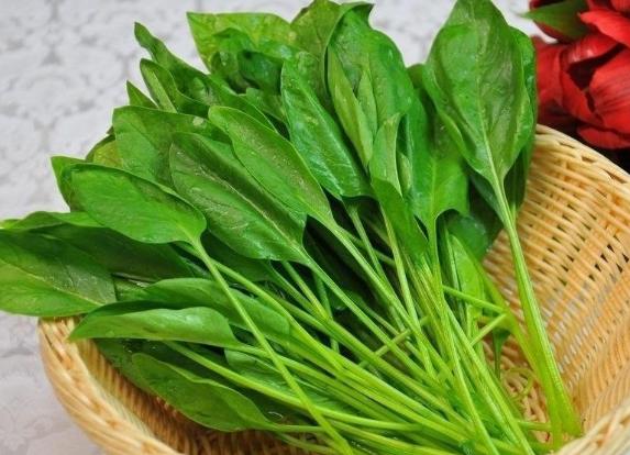 菠菜的营养价值及营养成分