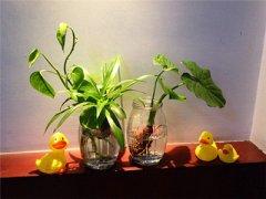 带刺的植物是否会带来煞气