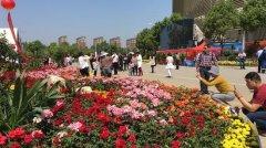 南阳月季销量占全国出口量70%以上 将建世界月季名城