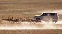 两车被曝追逐碾压藏羚羊 警方:有追逐未碾压