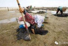 广东湛江一农妇以挖虫为生 1个月赚三五千