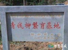 县委书记李高岭到伏山乡检查全国青钱柳论坛准备工作