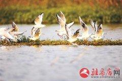 海鸥掠过湖面