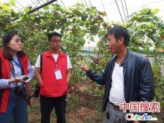 蜂蜜甜瓜果香 郑州两县市精准扶贫各有奇招