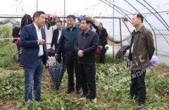 市委副书记、政法委书记王勇到我区调研脱贫攻坚工作