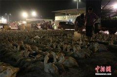 男子在郑州有6家饭店 却关掉饭店回老家养鸭子