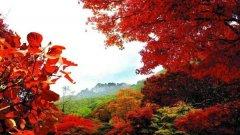 秋游宝天曼 看万山红遍 层林尽染