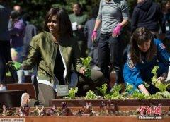 """米歇尔对白宫未来主人发话:别对菜园""""乱来"""""""