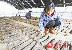 泌阳县马谷田镇食用菌产业持续循环发展