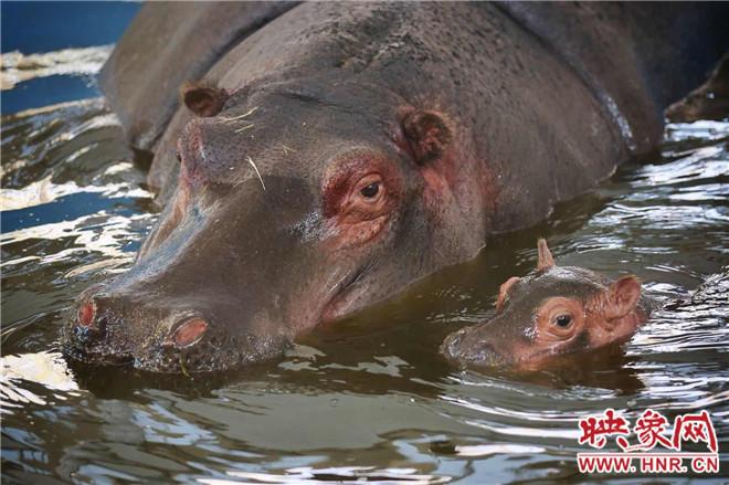 今年新诞生的动物宝宝和妈妈在一起