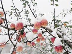 河南部分地区下雪 本周天气晴冷最低温度1℃左右