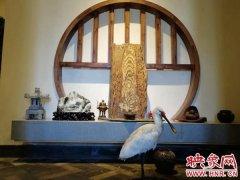 郑州市民救下落难大鸟 野生状态下全国仅1000多只