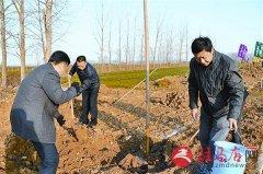 市工商局开展义务植树活动
