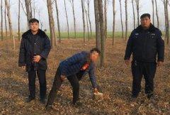 """临近年末小偷""""冲业绩"""" 一上午偷盗20余棵树"""