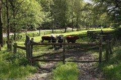 考眼力:你能找到隐藏在农场中的裸模吗?