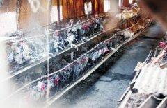 医院旁竟藏个万只鸡养殖场 究竟何时能搬走?
