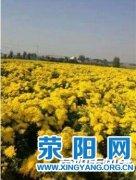 靓丽王村邀你来赏菊