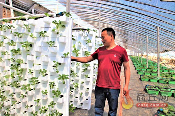 虞城供给侧改革让农业活起来