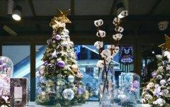 180元一枝 今年圣诞流行送棉花 网友调侃:我家被子值好几万