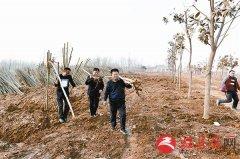驿城区扎实推进创建国家森林城市工作