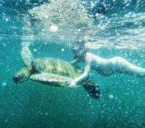 林青霞继女挺9月孕肚浮潜 水下与巨型海龟同游