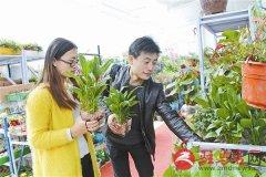 春季花卉销售旺
